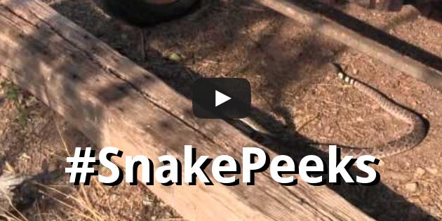 #SnakePeeks