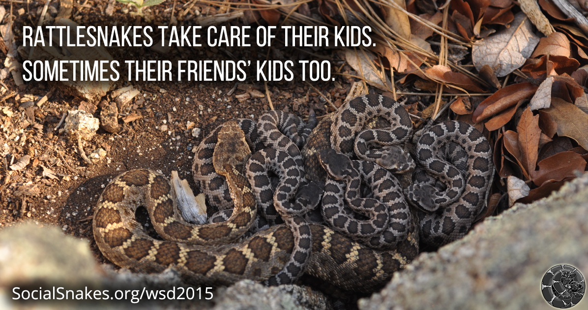 Rattlesnakes take care of their kids.